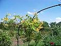 Арка в Донецькому ботанічному саду.jpg