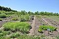 Ботанічний сад «Червона калина» - 15061990.jpg