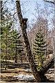 Весна на Южном Урале. - panoramio (14).jpg