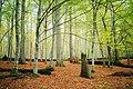 Восень у Белавескай пушчы.jpg
