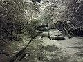 Выпал снег в конце марта.jpg