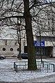 Гінкго Сікорського, Київ. Фото 1.jpg