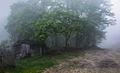 Заброшенный дом в лесу.jpg