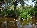 Затоплений ліс на о.Круглик, біля колонії бакланів.jpg
