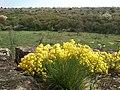 Квіти Монастирища.jpg