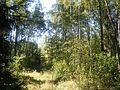 Лес - panoramio (8).jpg