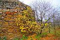 Микулинецький замок 7.jpg