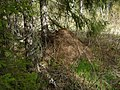 Муравьиная куча - panoramio.jpg
