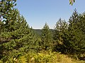 Планина Озрен (20).jpg