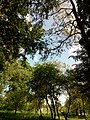 Прилуцький дендропарк Прилуцький район, м. Прилуки, вул. Вавилова, 16 74-107-500 09.jpg