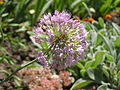 Растения в Седово 139.JPG