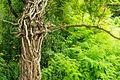 Старые старые деревья - panoramio.jpg