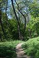 Стежки парку Шиллера.jpg