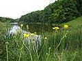 Степная растительность рядом с Иськовым прудом.jpg