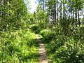 Тропа в парке Зверинец - panoramio (1).jpg