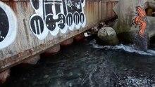 Файл:Устье реки Сочи.webm