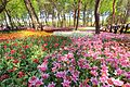 ひたち海浜公園 - panoramio (122).jpg