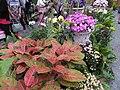 士林官邸菊展 Shilin Official Residence Chrysanthemum Show - panoramio.jpg