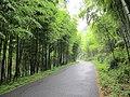 张家岭的路road to Zhangjialing - panoramio.jpg