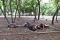 東勢林業文化園區 Dongshi Forestry Culture Park - panoramio (1).jpg