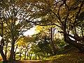 野中宮山古墳にて Colored leaves in Nonaka Miyayama-kofun(tumulus) 2012.11.16 - panoramio.jpg