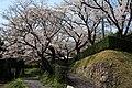 陶彩の道の横道の桜 左側の道を行くと天光の湯、バローに出ます。 - panoramio.jpg