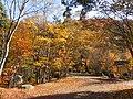 黄色い庭(Yellow garden) - panoramio.jpg