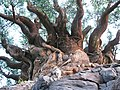 -ARBOL DE LA VIDA-TREE OF LIFE-DISNEY ANIMAL KINGDOM - panoramio.jpg