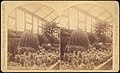 -Group of 18 Stereograph Views of the 1884-1885 New Orleans Centennial International Exhibition- MET DP75668.jpg
