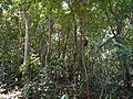 ... ¿ ant's termite's ? nest (33184099096).jpg