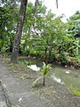 0293jfBarangay Bungahan Sumapang Bata Malolos City Bulacanfvf 05.jpg