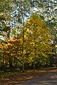 08- Autumn Leaves begin to fall Blue Mountains (17314389702).jpg