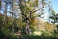 0 Barvaux-en-Condroz - Le Chêne au Gibet (2).JPG