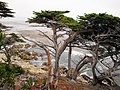 17 Mile Drive, Carmel, California, USA - panoramio.jpg