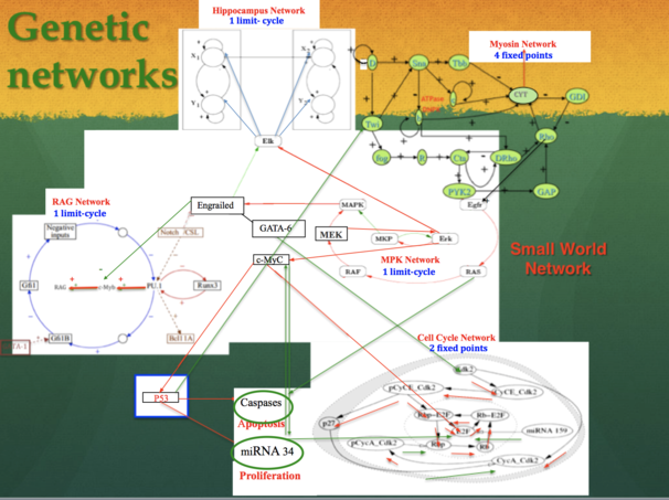 2.Genetic network.png