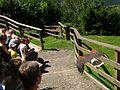 2008 07 15 Bird Care Centre of Castel Tyrol 60755 D9770.jpg