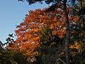 2011-10-26-173331 49,414780, 8,666804.JPG - panoramio.jpg