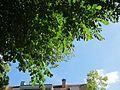 20120816Karlsruher Str Hockenheim09.jpg