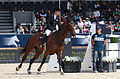 2013 Longines Global Champions - Lausanne - 14-09-2013 - Faye Schoch et Nouvelle Europe Z 1.jpg