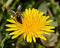 2014-04-01 12-47-46 abeille.jpg