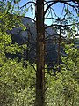 2015-07-13 07 18 34 View east through the trees from the North Loop Trail about 4.9 miles west of the trailhead in the Mount Charleston Wilderness, Nevada.jpg