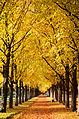 2015-10-26 Goldener Herbst in der Herrenhäuser Allee durch den Georgengarten in Hannover.jpg