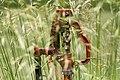 2015-365-175 Pump in the Grass (19134252392).jpg