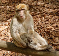 2016-04-21 14-23-19 montagne-des-singes.jpg