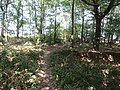 2018-07-25 Footpath in Foxhill woods, Northrepps (1).JPG