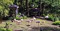 2018 04 ZooEberswalde Flamingos IMG 1175.JPG