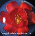 3d-Gelatine-Blume Freesie 2.png