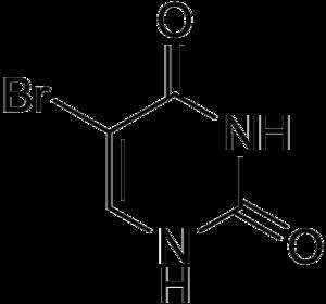 5-Bromouracil - Image: 5 Bromouracil structure