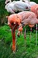 50 Jahre Knie's Kinderzoo - Flamingos 2012-10-03 16-39-18.JPG