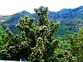 A@a St.Cristine Chapel - Agia Paraskevi area Askas - panoramio (2).jpg